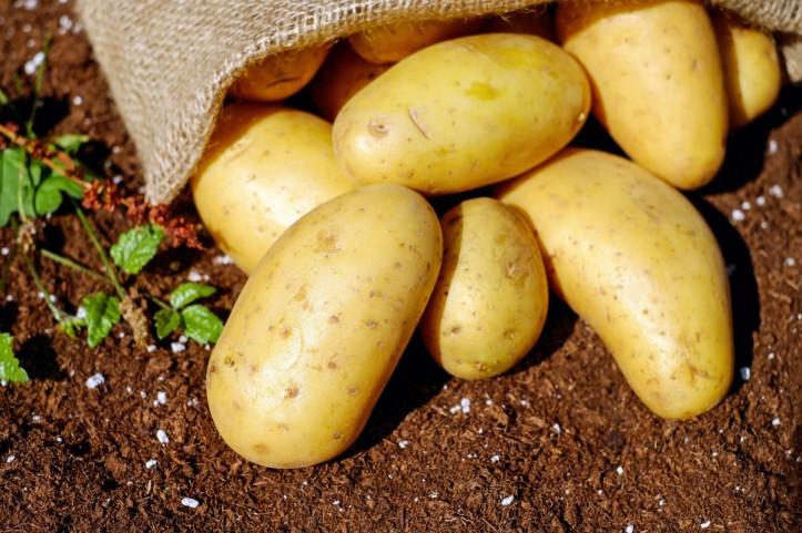 potatoes_vegetables_erdfrucht_bio_harvest_garden-548417.jpg!d